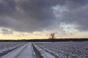Dirt Road on icy Fields