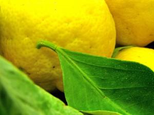 Zitronen sind gesund